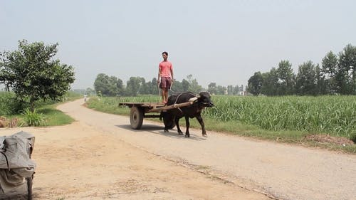 Footage Of Lifestyle Of People In The Countryside