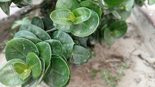 Close-Up Video Of Leaves