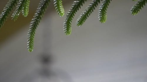 Drops Of Water Coming From Leaves In Slow Motion