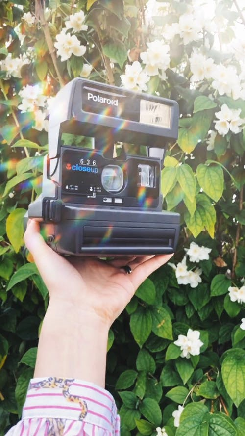 Person Holding A Polaroid Camera