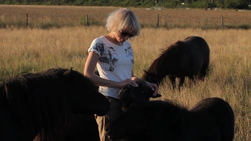 Woman Standing on Pasture Land While Petting the Domestic Yaks