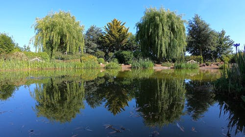 Scenic View of a Water Pond