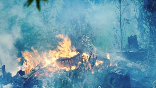 Burning Woods