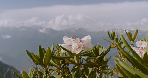 View Of The Mountains On Background With Focus On Beautiful Flowers