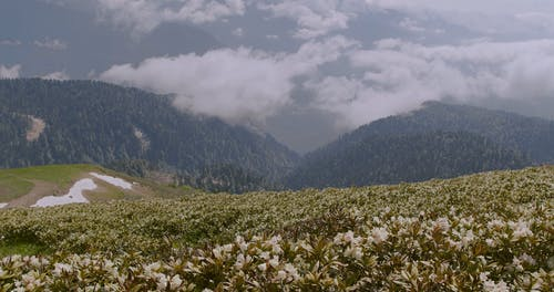 Hikers Walking On A Field Of Flowers On Top Of A Mountain