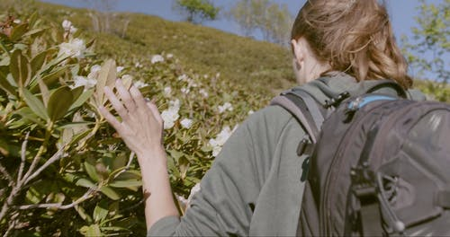 Video Of Woman Runs Her Fingers Over The Flowers