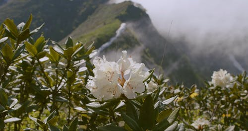Wild Flowers Blooming In The Mountain