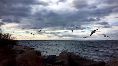 Seagulls Flying by the Beach