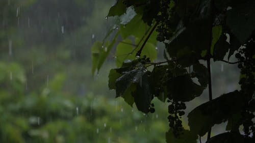 Video Of Raindrops Pouring
