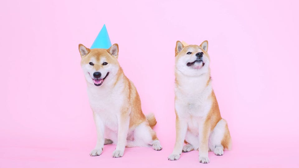 Cute Shiba Inu Dogs With Party Hats
