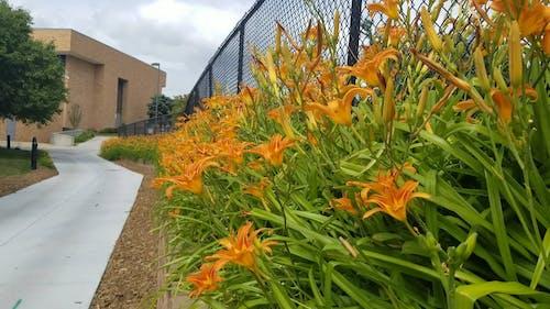 A Garden Of Orange Flowers Outside A Building