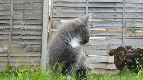An Adorable Kitten Walking