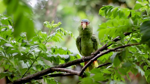 Green Bird Perched on Tree Branch