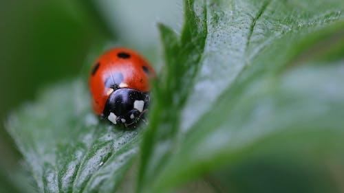 Macro Shot of Ladybug on Green Leaf Plant