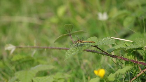 Shallow Focus of Green Dragonfly Perched on Green Leaf