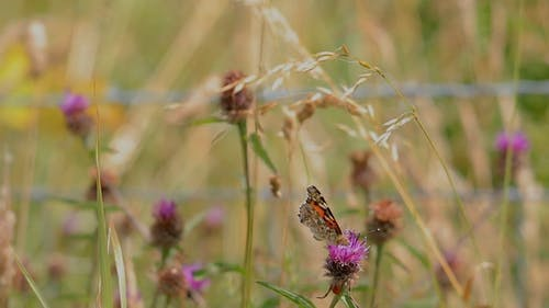 Shallow Focus of Butterfly Perched on Purple Flower