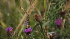 Selective Focus of Butterfly Perched on Purple Flower