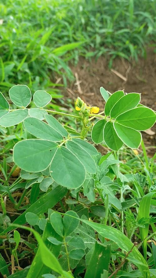 Close-Up View of Swaying Green Leaves