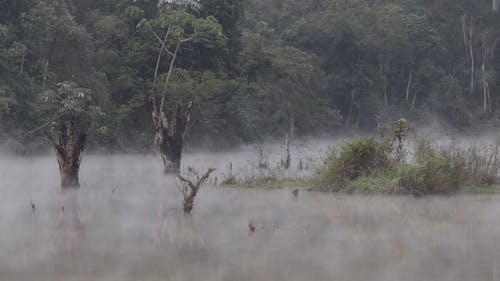 Video Of Foggy Forest