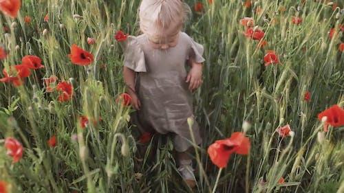 Girl Walking in Between Red Poppy Flower Field