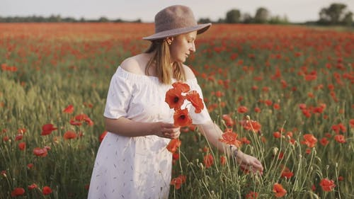 Shallow Focus of Woman Picking Red Poppy Flowers