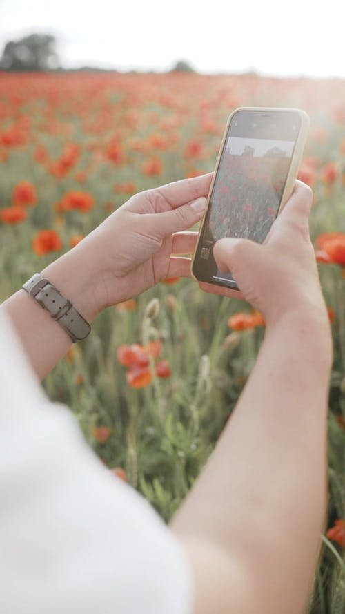 Shallow Focus of Person Taking Photo of Flower Field