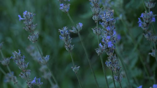 Close-Up Video Of Delicate Flowers
