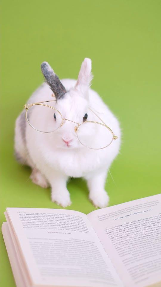 Cute Bunny With Eyeglasses