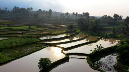 Drone Footage Of A Rice Terraces
