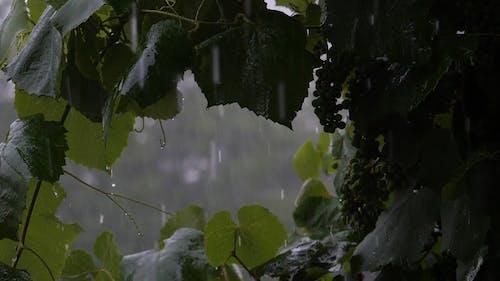 Heavy Downpour Of Rain