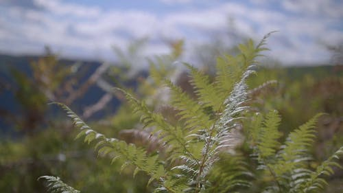 Close-up Video Footage Of Fern Plant Leaves