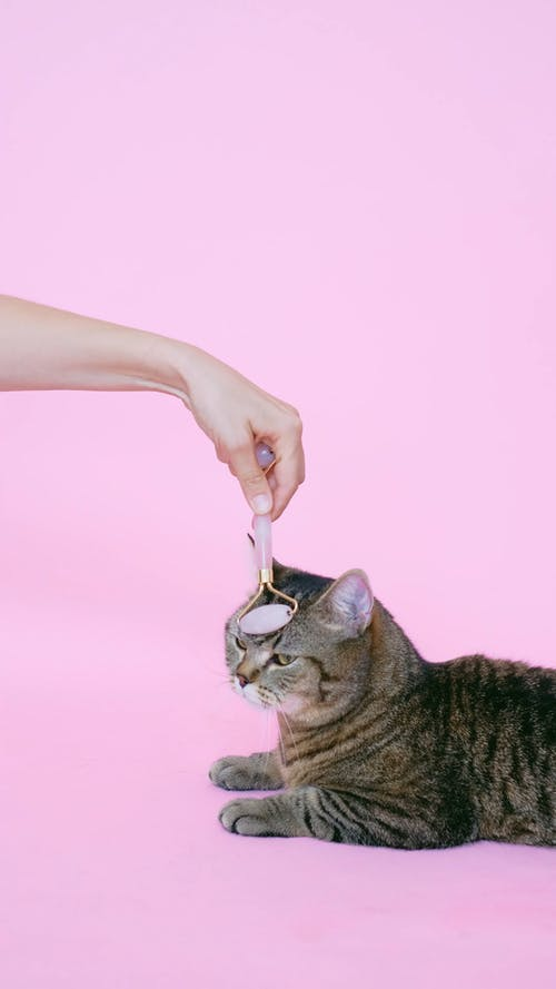 Person Massaging a Cat With a Facial Roller