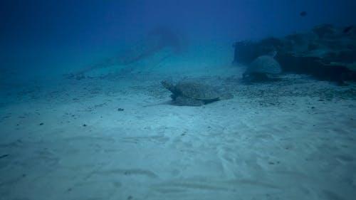 Sea Turtle on Seabed