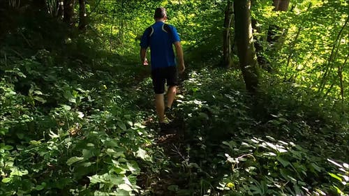 A man Trekking a Forest With His Dog