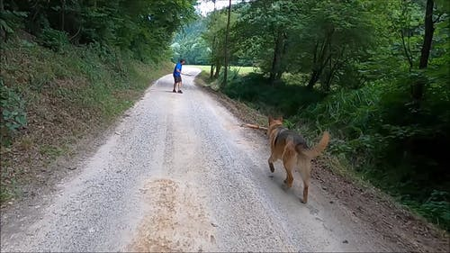 A Man Playing With His Dog On A Forest Road