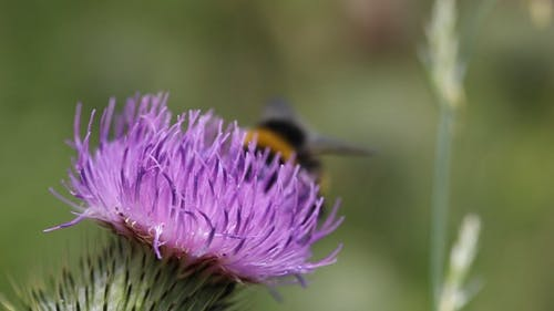 A Bee Feeding On A Flower's Nectar