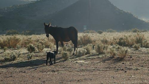 A Dog Walking Towards A Horse