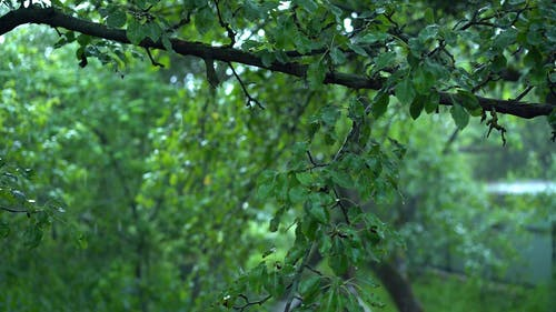 Shallow Focus of Green Leaves During Rainy Weather