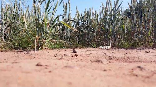 Drone Footage of Farm Field