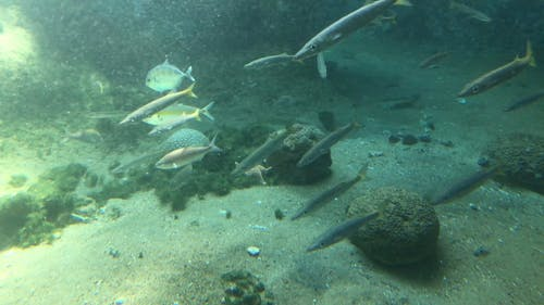 Marine Life Inside the Aquarium