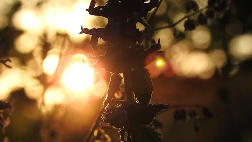 Silhouette Footage of a Plant