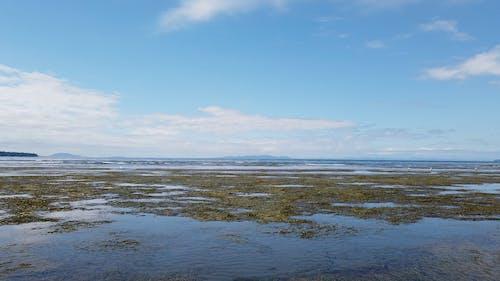 Beach on a Low Tide