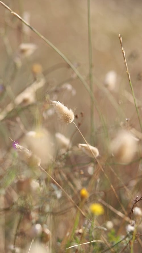 Grass Swaying in the Wind