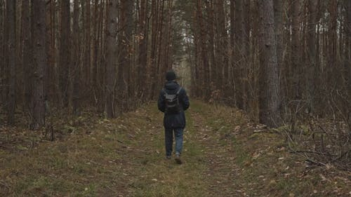 A Man Walking on a Pathway Between Tall Trees