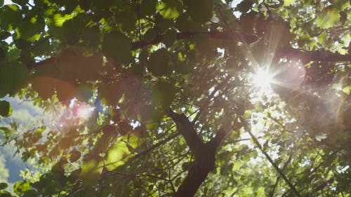 Tree Leaves As Shade From The Sunrays