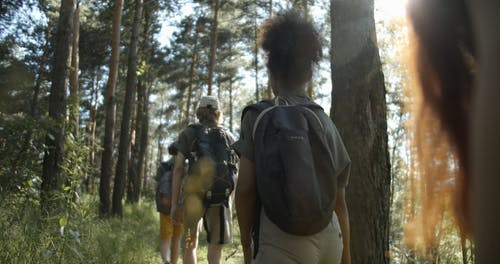 People Hiking in a Forest
