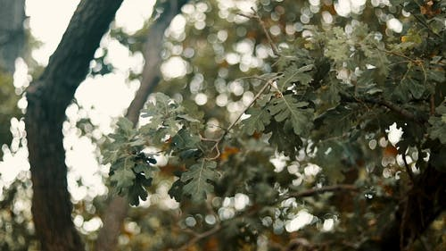Close-Up Video Of Green Leaves On A Windy Day