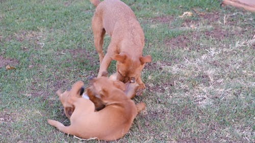 Dogs Playing With Each Other