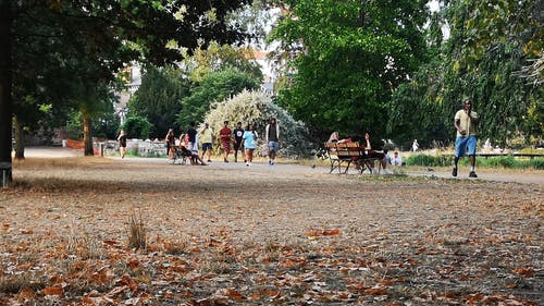 People Walking in a Park