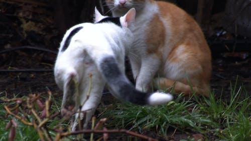 Two Cats in Backyard